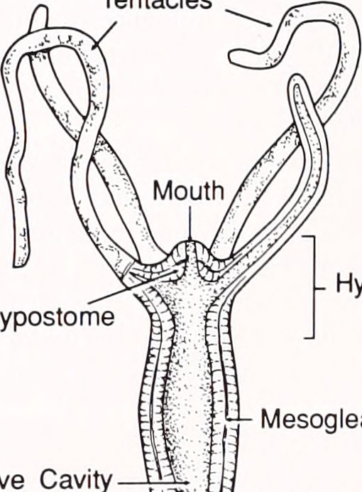 Label Hydra Diagram