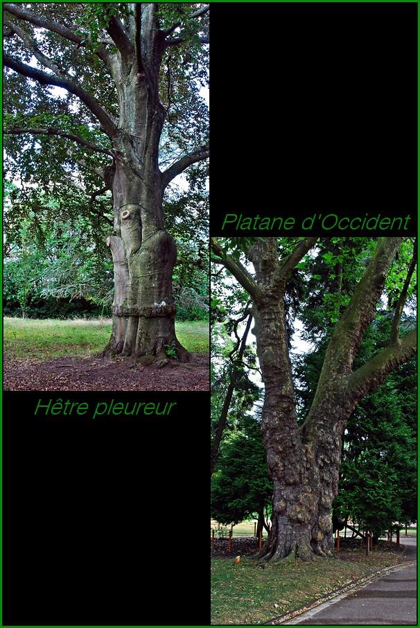 7 metz jardin botanique arbres h tre pleureur platane for Jardin botanique metz