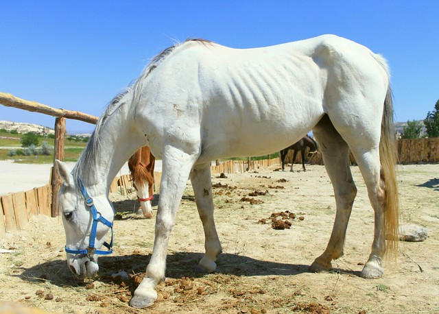 Horses - Goreme