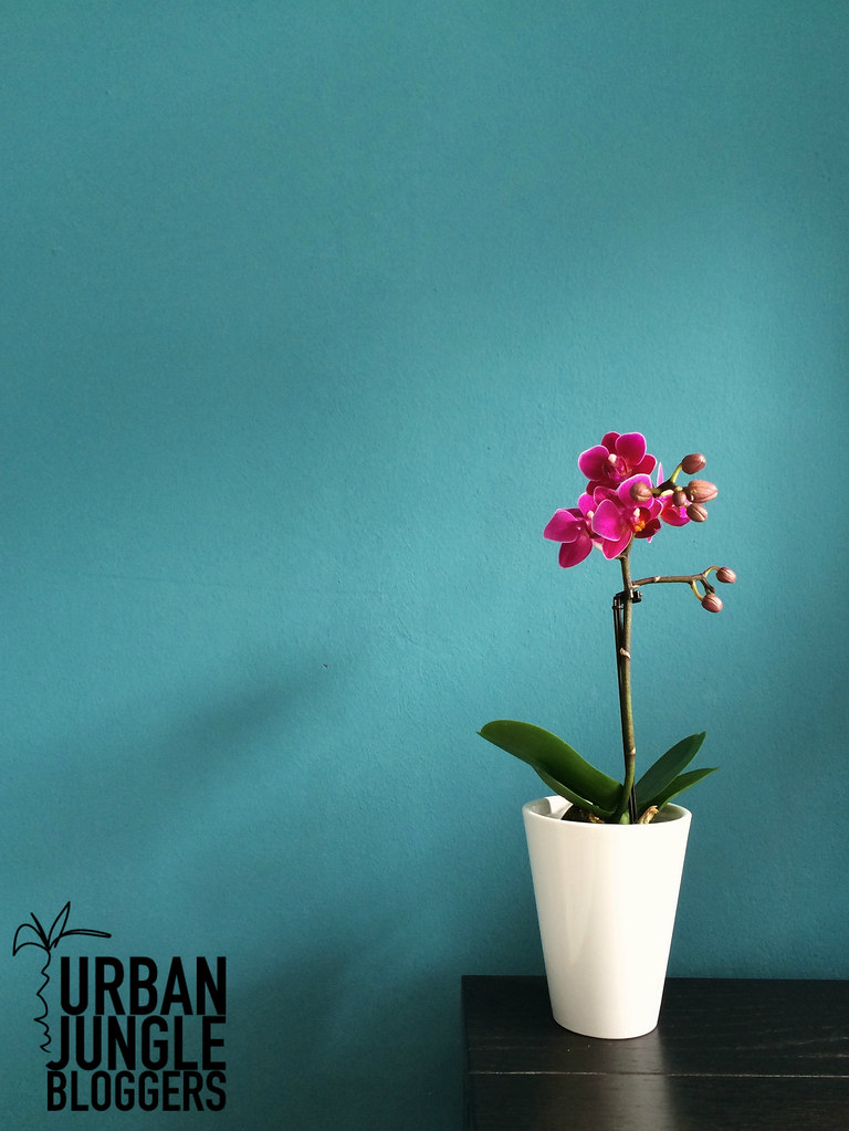 purple orchid for urban jungle bloggers plant color pop