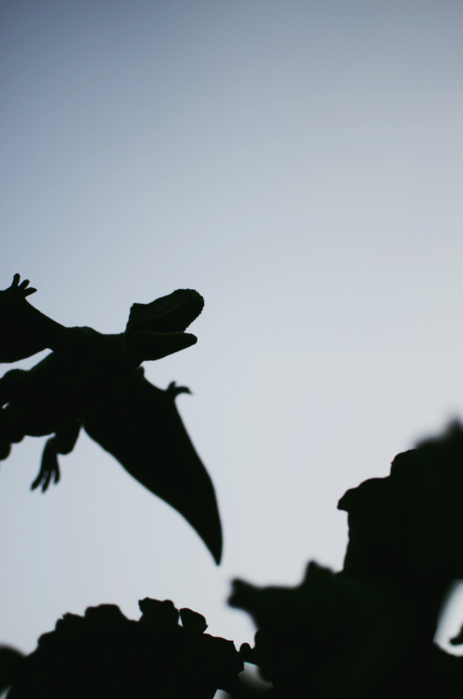 the day dinosaurs came into our garden