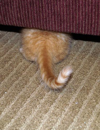 blogpaws-kittensC01647