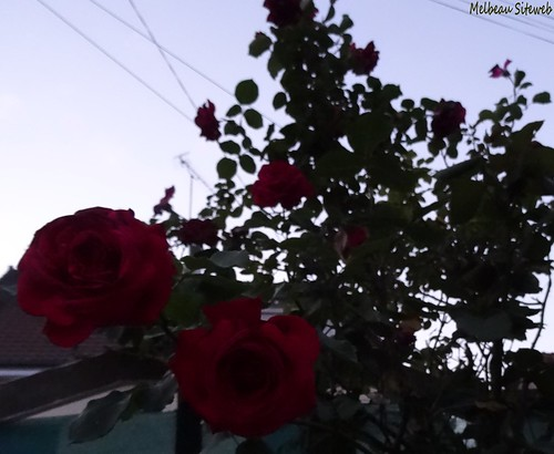 Au jardin du soir