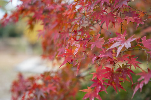 autumn_leaves_2017_02