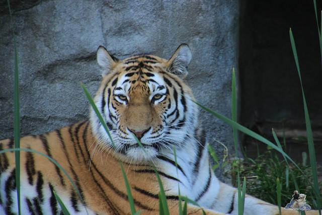 Tierpark Hagenbeck Dschungelnacht 06.05.2015   94