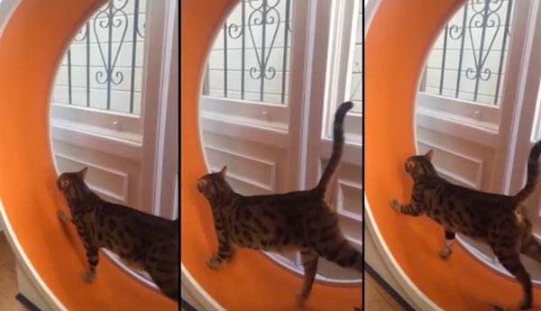 cat-exercise-wheel-adam-savage