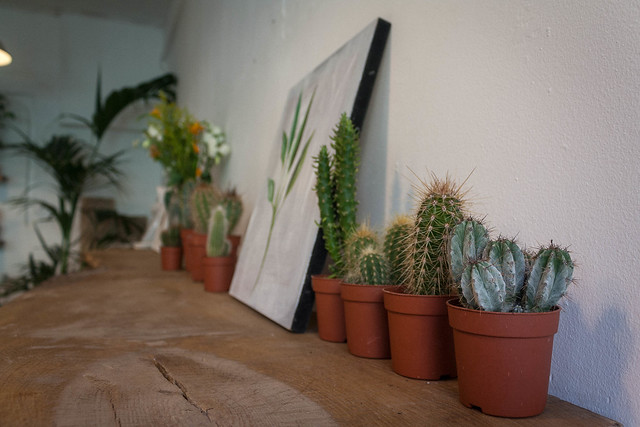Cacti at 26 Grains, London
