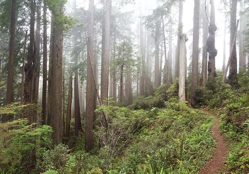 Beautiful Redwood NP