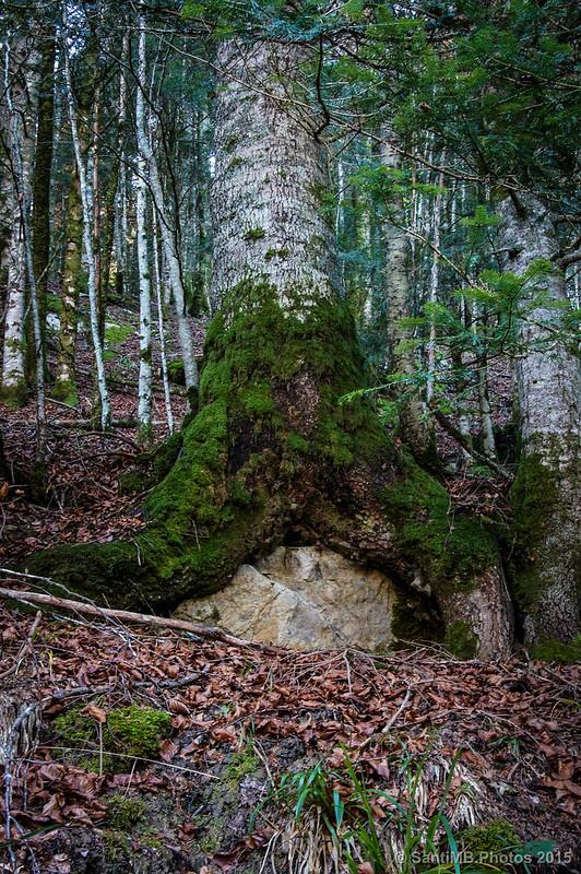 El árbol sentado