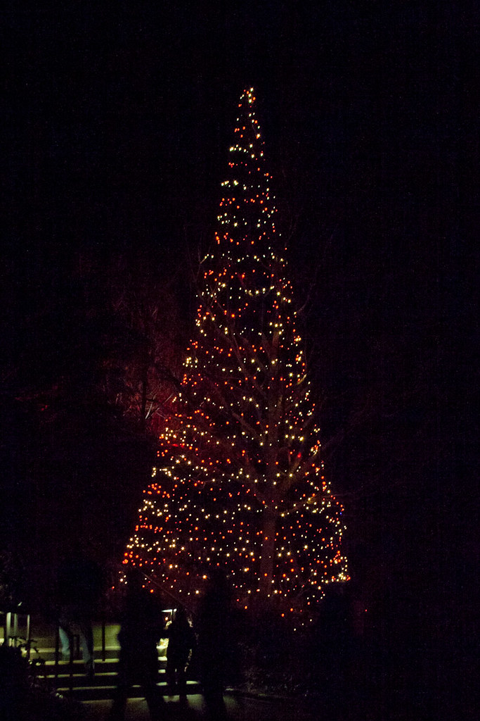 cw342 longwood gardens christmas lights by listentoreason