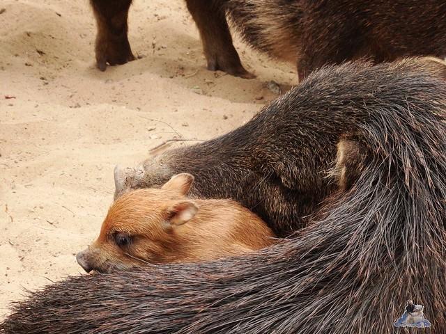 Zoo Berlin 09.06.2015  28