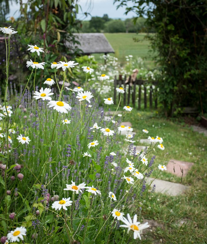 Fay's Garden