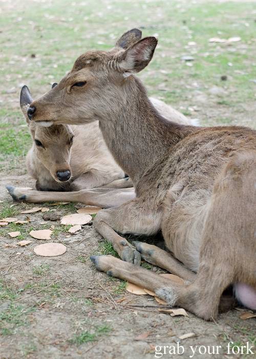 Mother and child deer at Nara Park, Japan