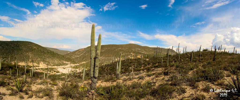 ... Llegando a las Salinas Grandes - ( Reserva de la Biosfera Tehuacán -  Cuicatlán ) - 2a52afb066317