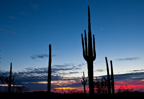 My Public Lands Roadtrip: Sonoran Desert National Monument in Arizona | by mypubliclands