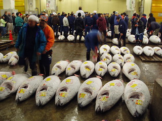 Tuna Auction, Tsukiji Fish Market | by stevecadman