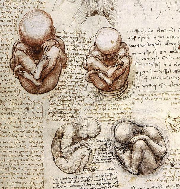 Leonardo da Vinci: Anatomical Drawings | Anatomical Drawings… | Flickr