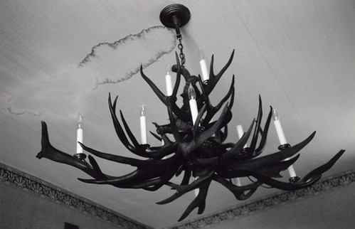 Antler Chandelier I Want One For My Bathroom Please