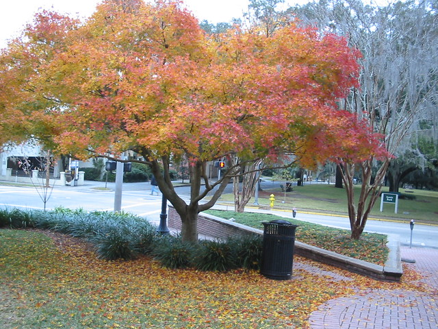 All Of The Fall Colors December 18th 2005 Tallahassee