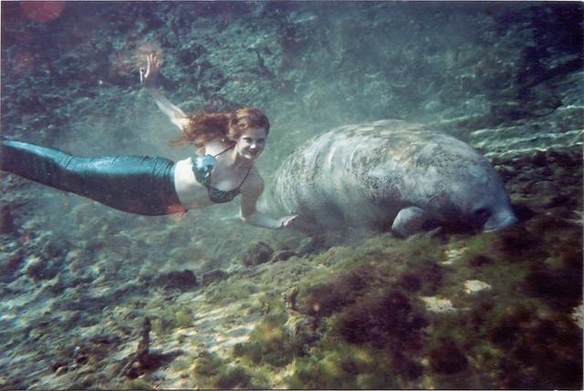 The sea mermaid manatees essay
