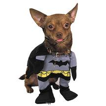 Dog in Batman Costume | by smedero ...  sc 1 st  Flickr & Dog in Batman Costume | Iu0027m thinking about buying a few hundu2026 | Flickr