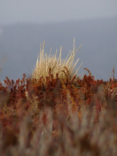 Coastal Grass | by photo fiddler