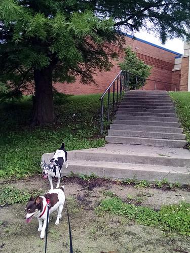 2015-06-14 - Walking Peedee, O-Ren & Mags - 0004 [flickr]