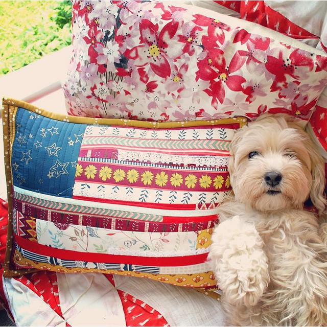 Wishing you all a Happy 4th of July!! ❤️ the #cracknellfamily 🐶