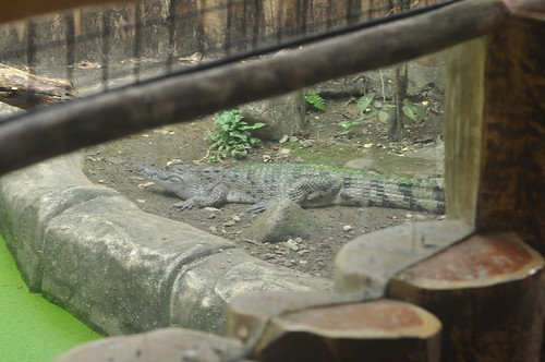 Some Kind of Crocodile (Avilon Zoo)