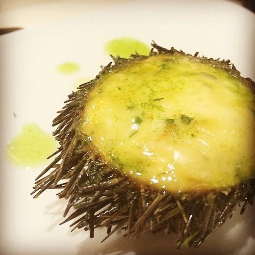 Sea urchin #sansebastian