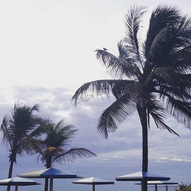 Sri Lanka - Negombo Palmiers