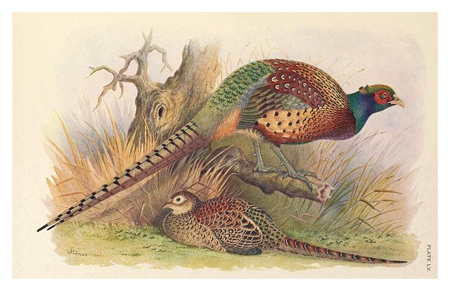 008-A monograph of the pheasants-1918-tomo 3