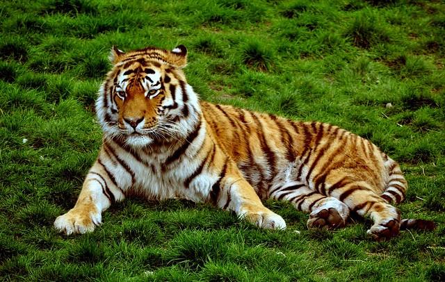 Jungle Jim - Animal Fact