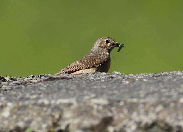 birdslakes29