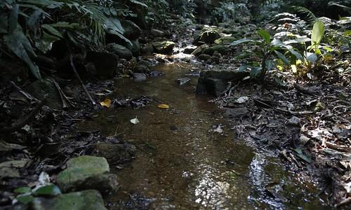 Rio Carioca em sua nascente, na Floresta da Tijuca