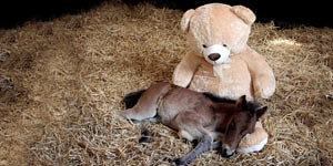 Pony Sleeping With Teddy Bear