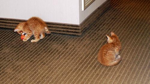 blogpaws-kittensC01621