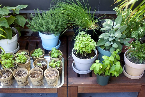 my herb garden!