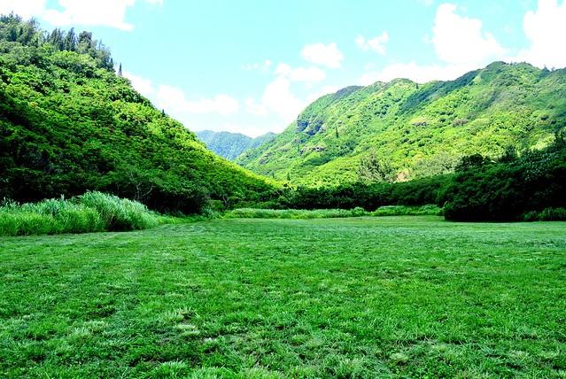 APIS Hawaii