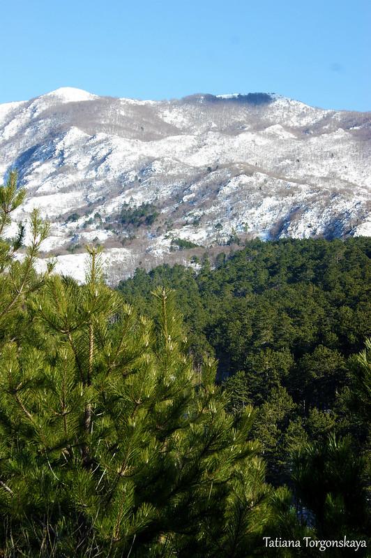 Хвойный лес и заснеженные горы