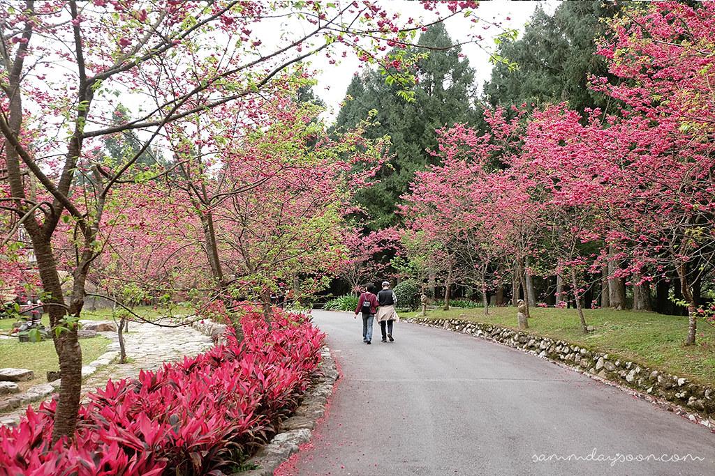 formosan-aboriginal-culture-village-cherry-blossom-couple