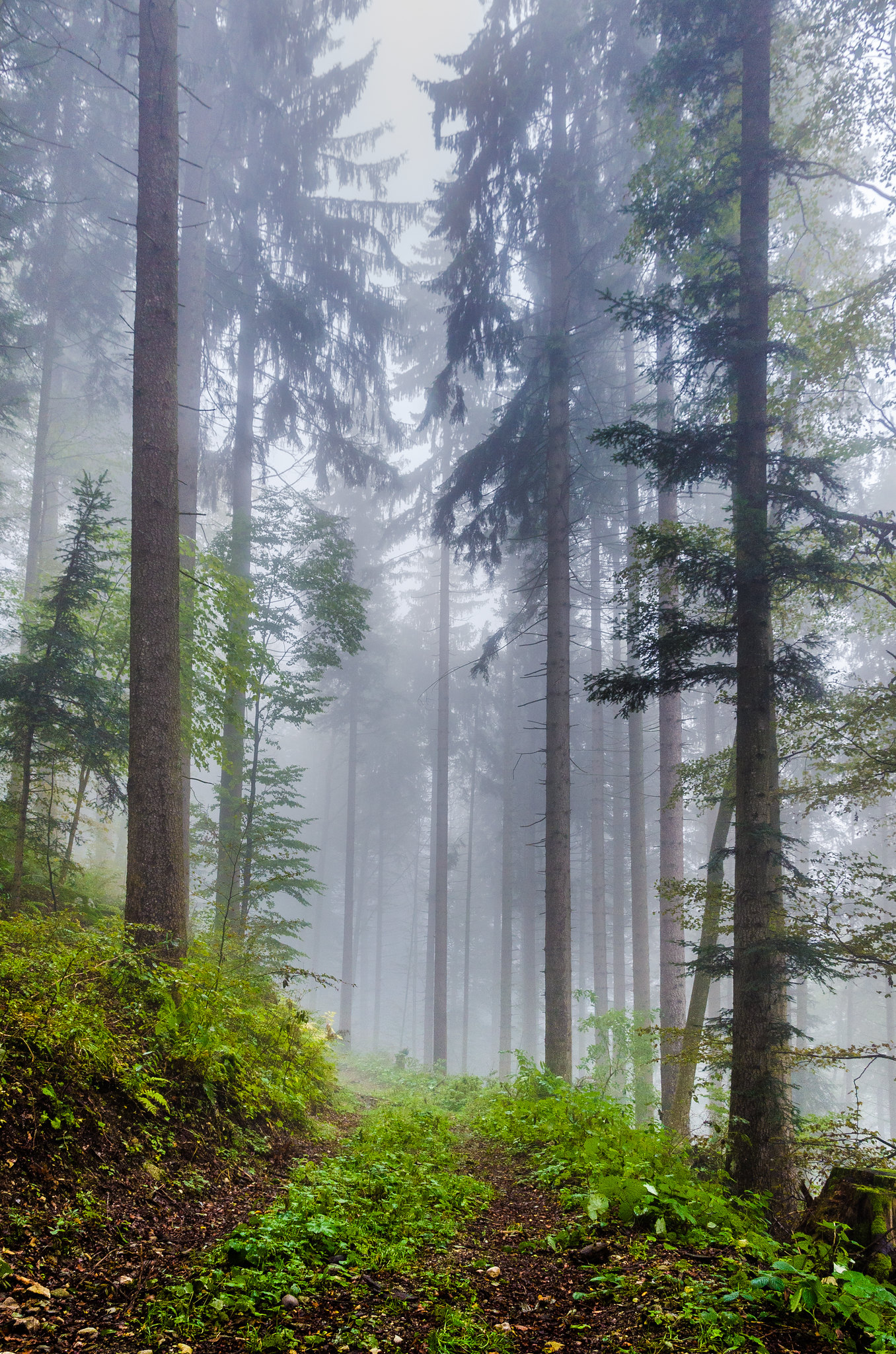 Misty morning hike in forest of Val de Travers, Switzerland [OC][1356x2048]