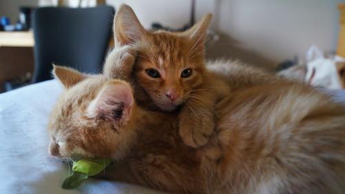 blogpaws-kittensC01569