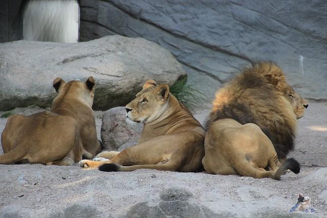 Tierpark Hagenbeck Dschungelnacht 06.05.2015   54