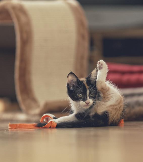 chaton qui urine tous les matins sur le lit que faire. Black Bedroom Furniture Sets. Home Design Ideas