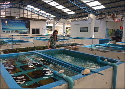 Marine Life tanks at Thai Mueang Coastal Resources Research Center
