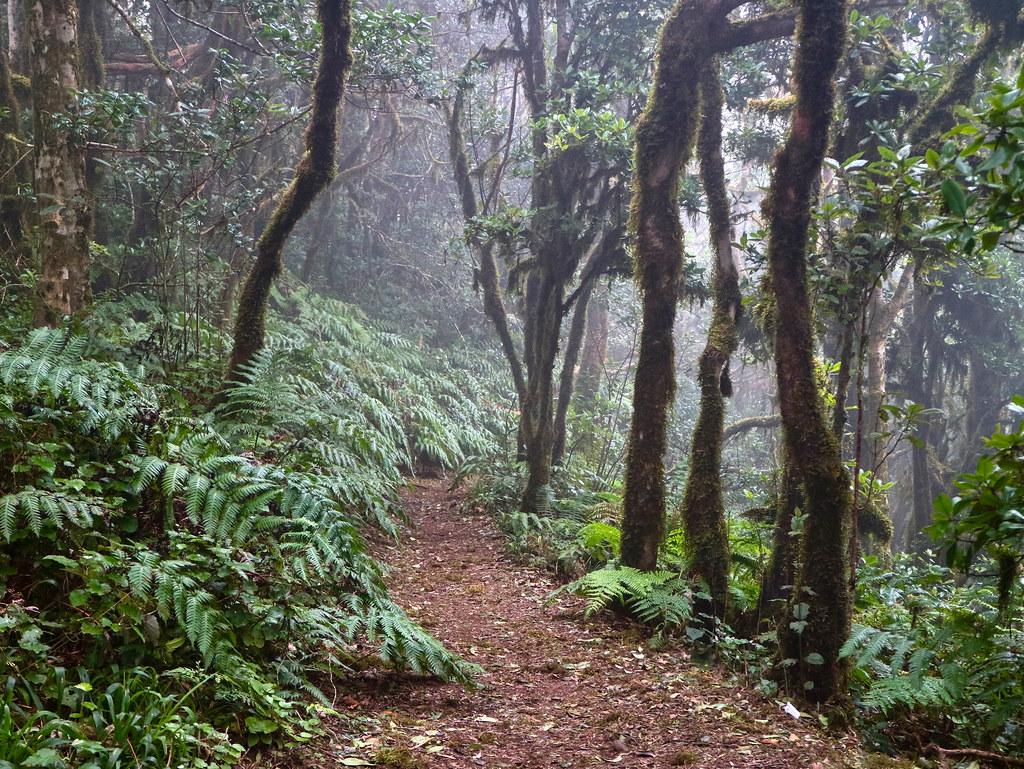 Visitar Bosque Encantado