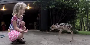 Girl And Baby Deer Become Friends