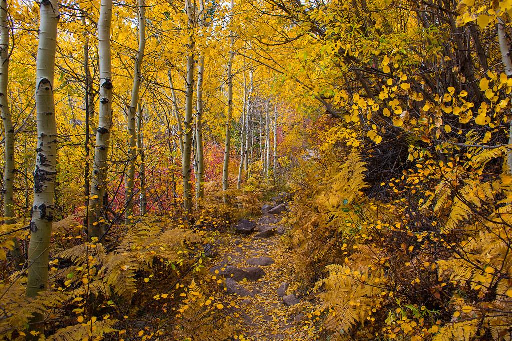 Barney Lake Fall Colors Hike #12