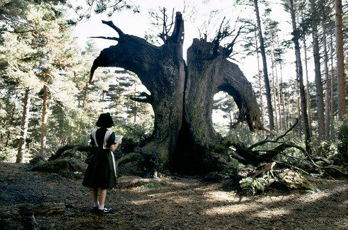 """Fotograma de """"El laberinto del fauno"""" de Guillermo del Toro"""